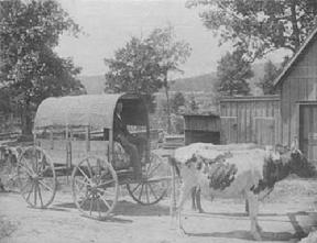 Man in a wagon pulled by oxen in Fort Payne,Alabama.1800's